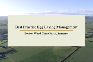 Best Practice Layer Management