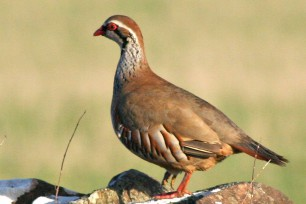 Positive Summer for Partridge